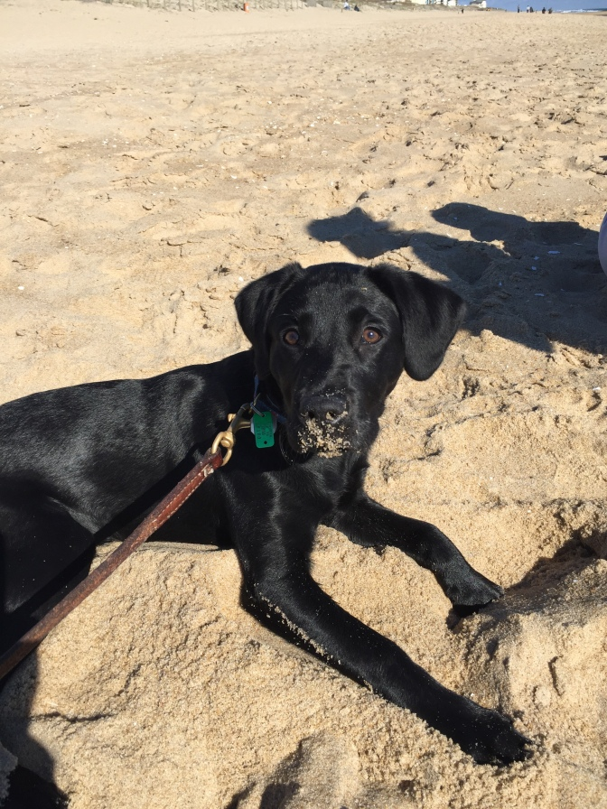 Gus – Why a Service Dog?